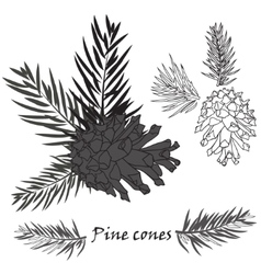 Fir tree branches with pine cone on white vector