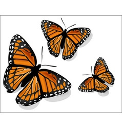 realistic butterfly on a white background vector image vector image