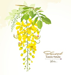 National flower of thailand cassia fistula vector