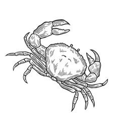 crab hand drawn vector image