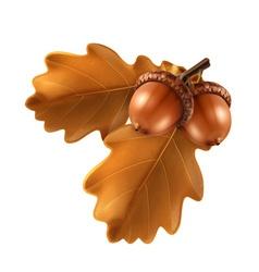 Oak branch with acorns vector image
