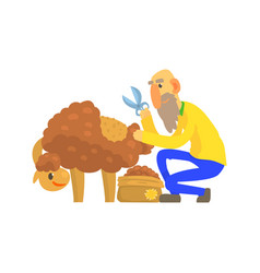 Old bearded farmer sheaving wool from sheep vector