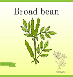 Broad beans or fava beans series of vegetables vector