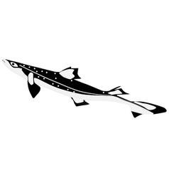 shark katran vector image