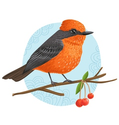 Vermilion flycatcher vector