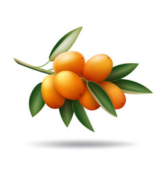 kumquat branch with orange fruits and green leaves vector image