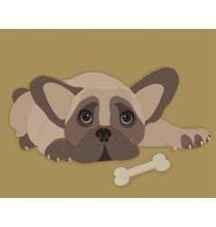 French bulldog isolated vector