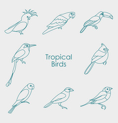 tropical birds icon vector image vector image