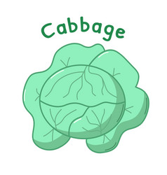 Isolated cabbage icon vector