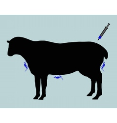 Sheep gets immunization against diseases caused by vector image vector image
