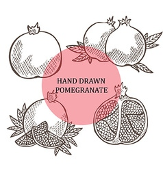 Hand drawn pomegranate fruits vector