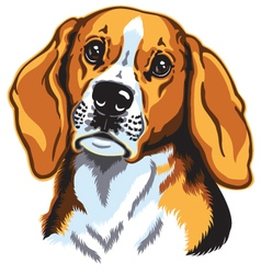 beagle head vector image