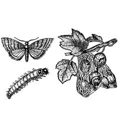 butterfly zophodia convolutella vector image vector image