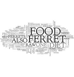 What do ferrets eat text word cloud concept vector