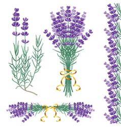 lavender common vector image