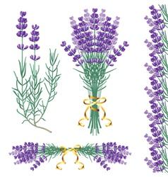 lavender common vector image
