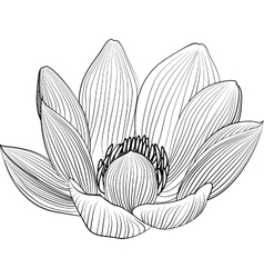 Lineart lotus flower line vector image vector image