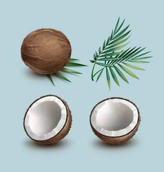 set of coconuts vector image