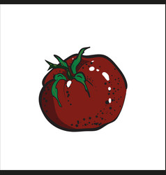 color sketch tomato vector image vector image