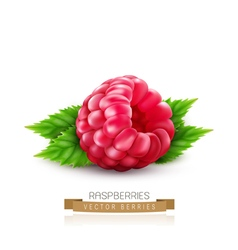 isolated raspberry with green leaves vector image vector image