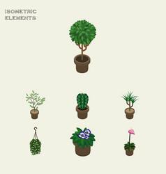 Isometric flower set of grower flowerpot peyote vector