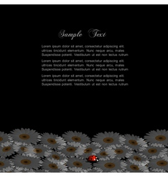 Stylish black background with chamomile and vector image