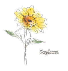 yellow sunflower design on white background vector image vector image