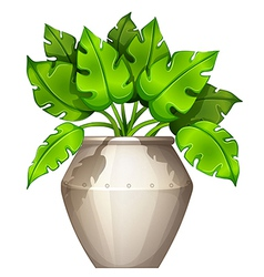 A plant with a heart-shaped leaves vector