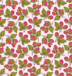 Raspberries pattern vector