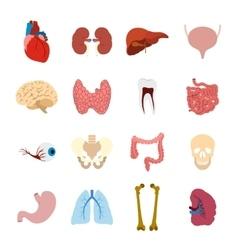 Internal organs flat icons vector