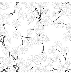 morning glory on white background vector image