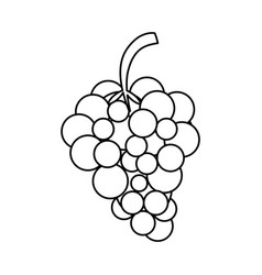 Sweet fruit grapes vector
