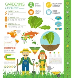 Gardening work farming infographic lettuce graphic vector