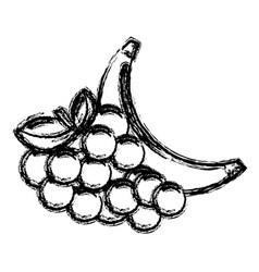 Contour grape and babana fruit icon vector