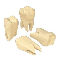 Human teeth isometric flat vector image