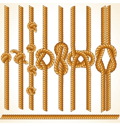 seamless rope elements vector image vector image