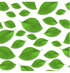 green realistic leaves seamless pattern vector image