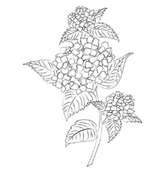 Ink sketch hydrangea flower vector