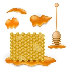 Sweet honey combs vector
