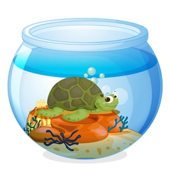a water bowl and a tortoise vector image
