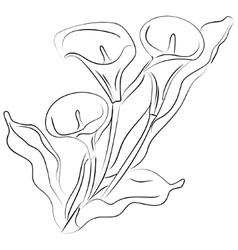 ink sketch Calla flower vector image vector image