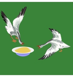 Two geese vector