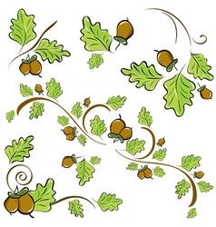 Acorns and oak leaves vector