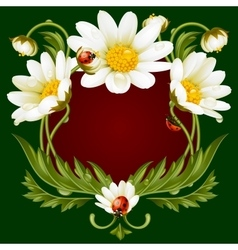 frame with daisies and ladybug vector image