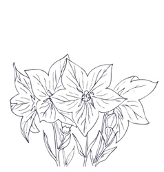 Hand drawn with bell flowers vector