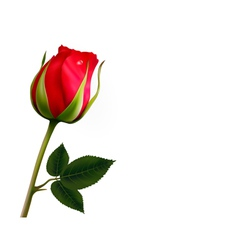 Flower background with a beautiful red rose with vector image