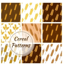 Wheat cereal grain rye ears seamless patterns set vector