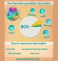 cartoon human brain infographics vector image