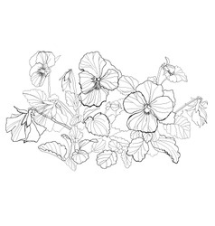 Viola flowers drawing on white background vector