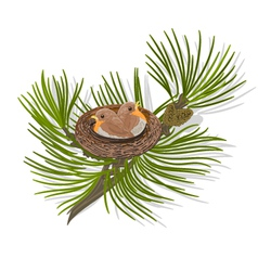 Chickadee birds in the nest on a pine branch vector